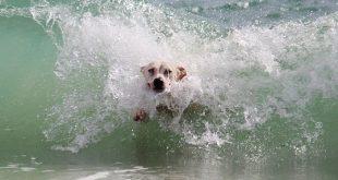 Hund Meer 310x165 - Im Urlaub mit dem Hund an die See