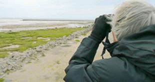 Nordseekueste 310x165 - Nordseeküste - der Natur auf der Spur