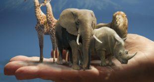 Big Five 310x165 - Südafrika – die Big Five und vieles mehr entdecken