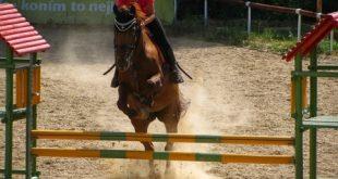 Pferde Parcours 310x165 - Reiten macht glücklich