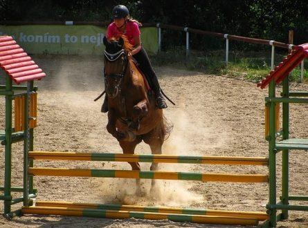 Pferde Parcours 445x330 - Reiten macht glücklich